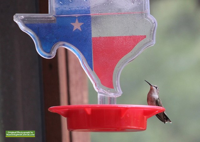 State of Texas hummingbird feeder