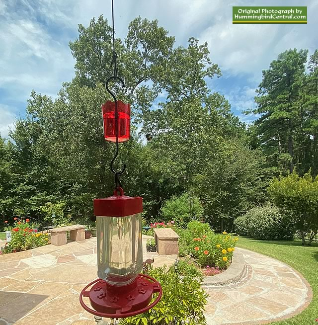 First Nature 5055 32-oz hummingbird feeder, with an OrienTools ant moat above it