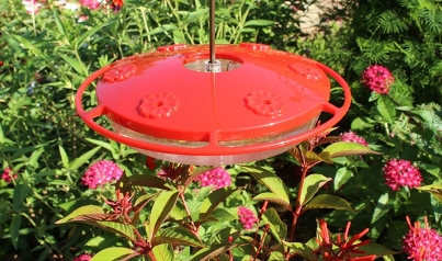An Aspects flat hummingbird feeder at eye-level with Firebush and Pentas