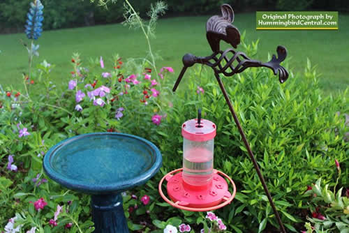 16-oz First Nature feeder at a low level near a variety of hummingbird friendly plants