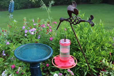 Low hanging hummingbird feeder surrounded by Batface Cuphea, Periwinkles, and Firebush