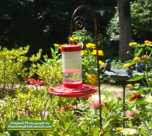 Hummingbird feeder nestled in a Butterfly Bush ... the hummers love it!