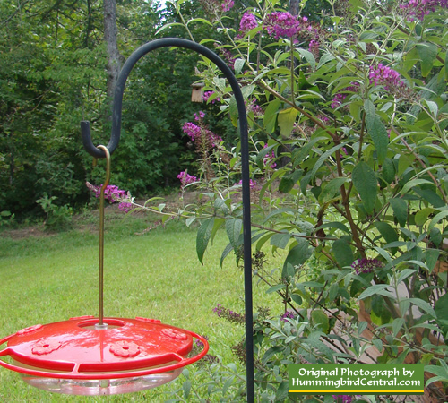 Flat, 6 feeding station hummingbird feeder with continuous perch