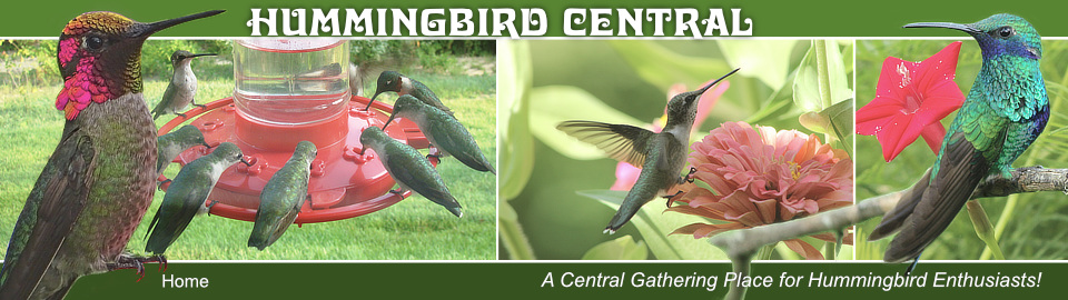 Home Page of Hummingbird Central ... A Gathering Place for Hummingbird Enthusiasts!