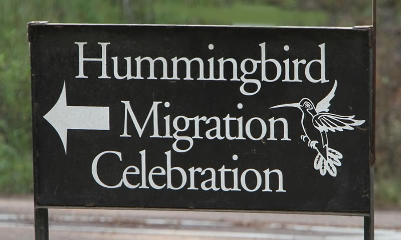 Hummingbird Migration Celebration