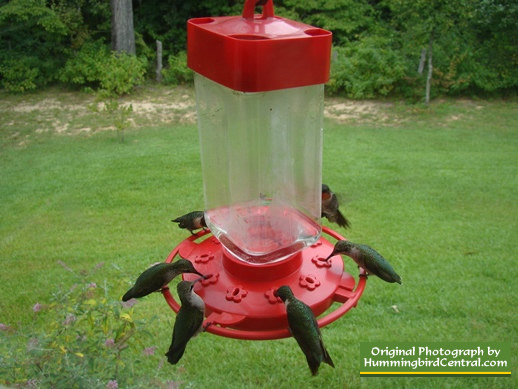 Several hummingibrds feeding on a 10-flower vertical feeder