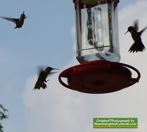 Hummingbirds hovering at feeder in Texas
