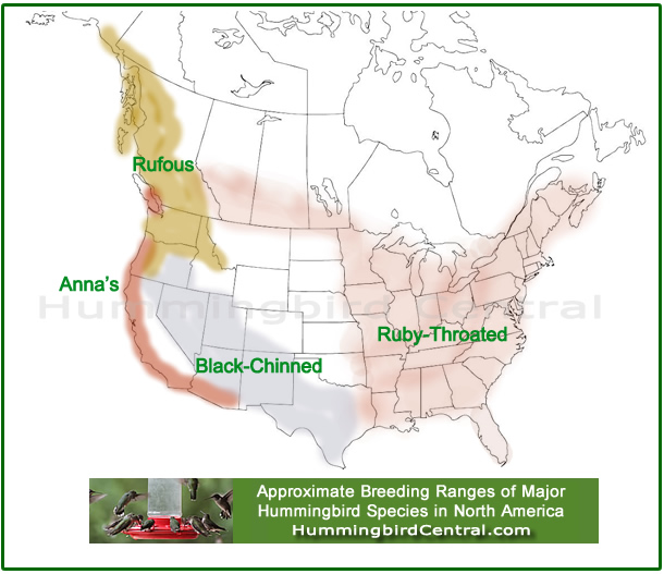 Map showing the approximate breeding ranges of four major hummingbird species in North America: Rufous, Anna's, Black-chinned and Ruby-throated