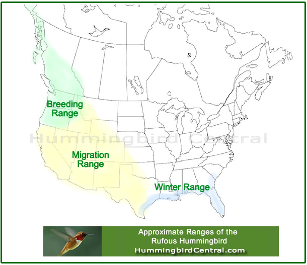 Map showing the approximate migration and breeding ranges of the Rufous Hummingbird in North America